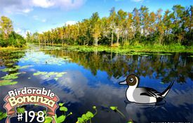 Birdorable 198: Northern Pintail