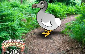 Birdorable 200: Dodo