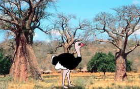 The Birdorable Ostrich