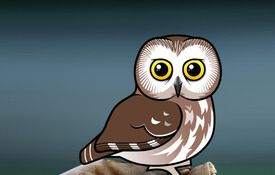 Birdorable Saw-whet Owl