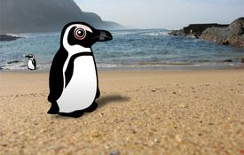 African Penguin fame