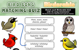 Bird Song Matching Quiz