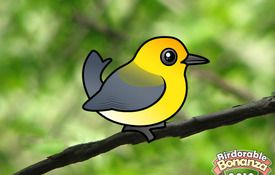 Bonanza Bird #3: The Prothonotary Warbler