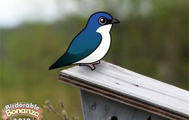 Bonanza Bird #15: The Tree Swallow