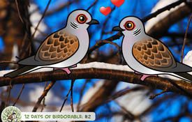 12 Days of Birdorable: Two Turtle Doves