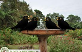 12 Days of Birdorable: Four Calling Birds