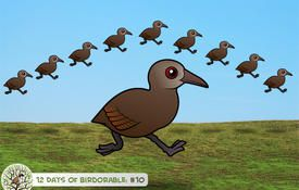 12 Days of Birdorable: Ten Lord Howe Woodhens-a-leaping
