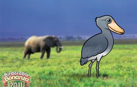 Bonanza Bird #2: Shoebill