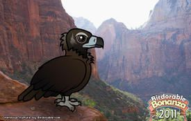 Bonanza Bird #3: Cinereous Vulture
