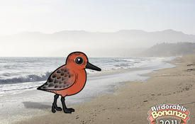 Bonanza Bird #5: Red Knot