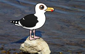 Bonanza Bird #12: Great Black-backed Gull