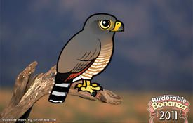 Bonanza Bird #17: Roadside Hawk
