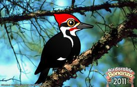Bonanza Bird #18: Pileated Woodpecker