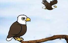 World Eagle Day