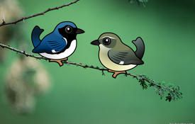 Black-throated Blue Warbler: Interesting Facts