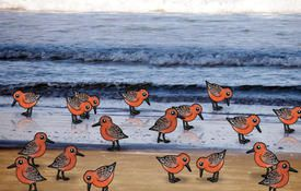 Good news for Red Knots
