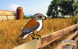 Bonanza Bird #18: Ferruginous Hawk