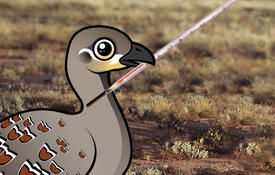 Malleefowl: the Thermometer Bird