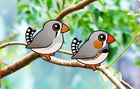 Introducing the Birdorable Zebra Finch