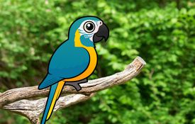 2013 Bonanza Bird #17: Blue-throated Macaw