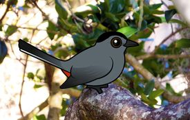 2013 Bonanza Bird #20: Gray Catbird