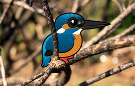 Kingfisher Extremes