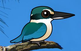 Species profile: Sacred Kingfisher