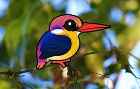 Species profile: Black-backed Dwarf-Kingfisher