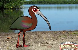 2014 Bonanza Bird #4: White-faced Ibis