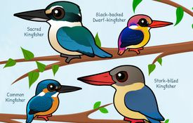New and Updated Birdorable Kingfishers
