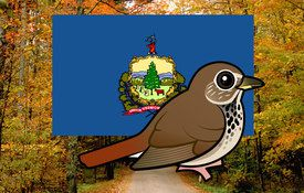 Vermont's Official State Bird