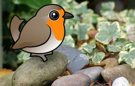 New! The European Robin