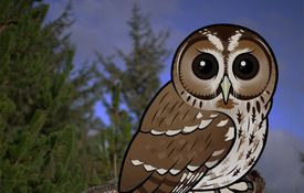 Our 600th Birdorable: The Tawny Owl