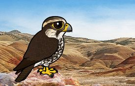 The Saker Falcon — a Falconer's Bird in Peril