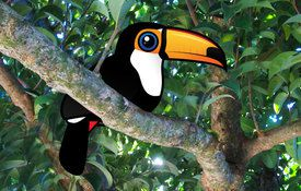 Fun Facts About Toucans