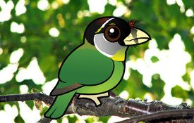 2015 Bonanza Bird #7: Fire-tufted Barbet