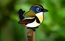 2015 Bonanza Bird #11: Many-colored Rush Tyrant