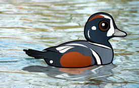 2015 Bonanza Bird #17: Harlequin Duck