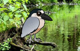 2015 Bonanza Bird #23: Boat-billed Heron