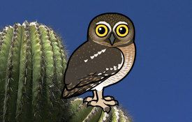 2015 Bonanza Bird #25: Elf Owl