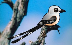 2016 Bonanza Bird #1: Scissor-tailed Flycatcher