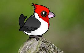 2016 Bonanza Bird #9: Red-crested Cardinal