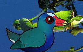 2016 Bonanza Bird #10: Purple Gallinule