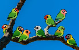 9 Awesome Lovebird Facts