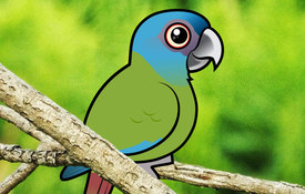 2017 Bonanza Bird #4: Blue-headed Macaw