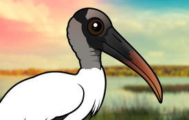 Facts About Wood Storks