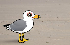 Gull Week 2018: Introduction