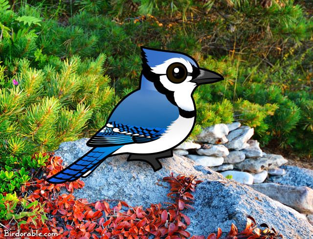 fun facts about blue jays  read about these smart birds