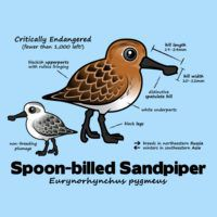 Spoon-billed Statistics