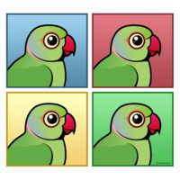 Four Color IRN / Indian Ringneck Parakeets